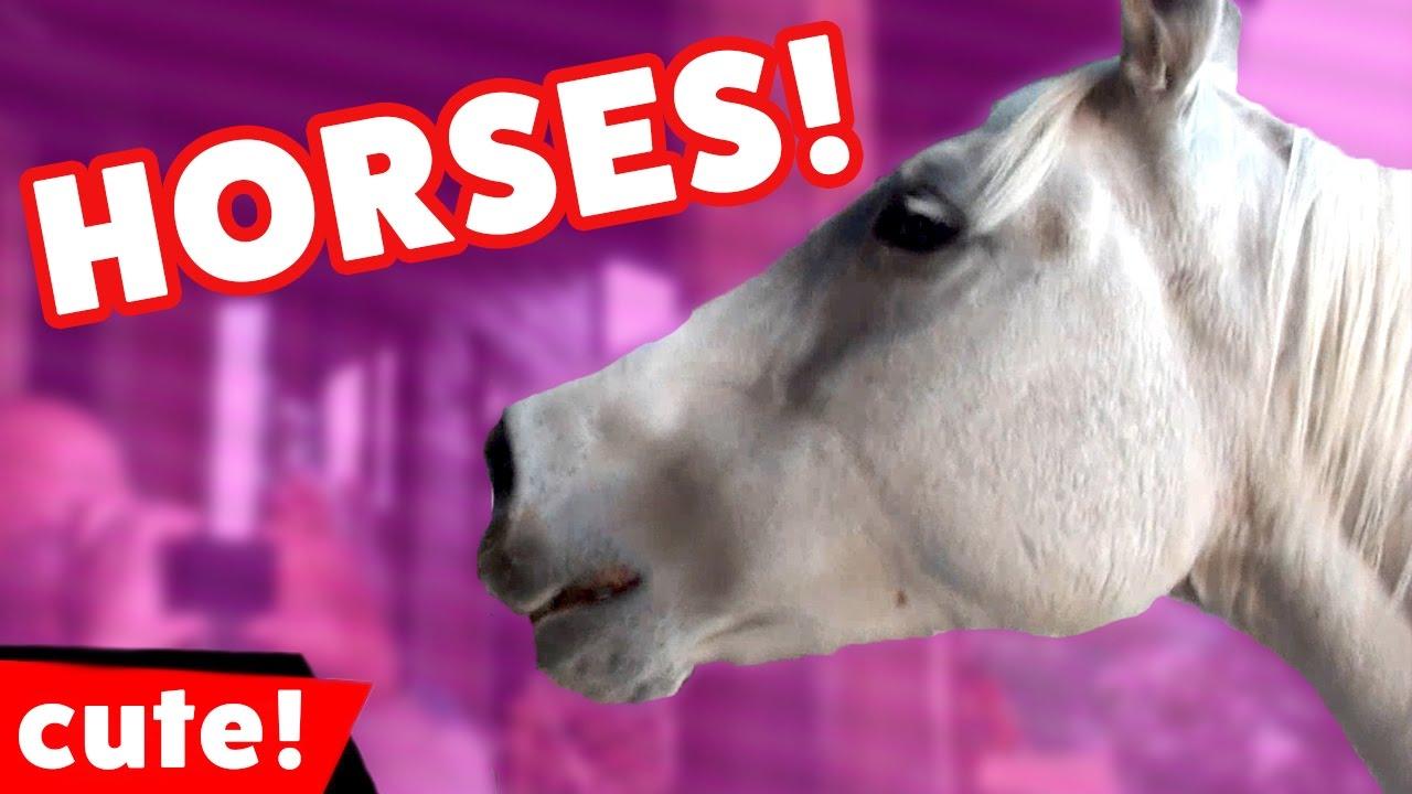 Humorous Horse Movies Compilation 2016 | Kyoot Animals