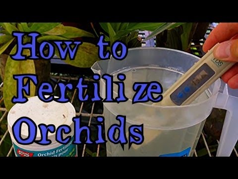 """How to Fertilize Orchids : Fertilizing Cymbidium Orchids  """" How to feed my Orchid"""""""