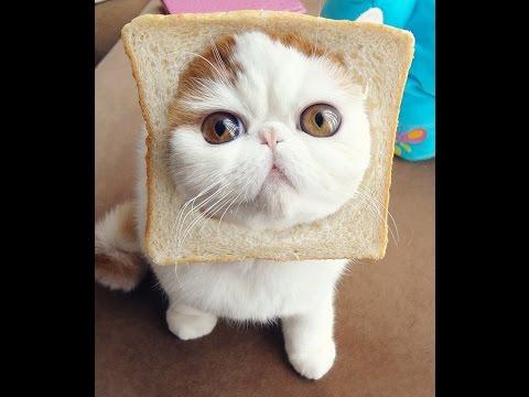 Gelagat Anak Kucing Comel Bermain Youtube
