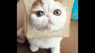 Gelagat Anak Kucing Comel Bermain