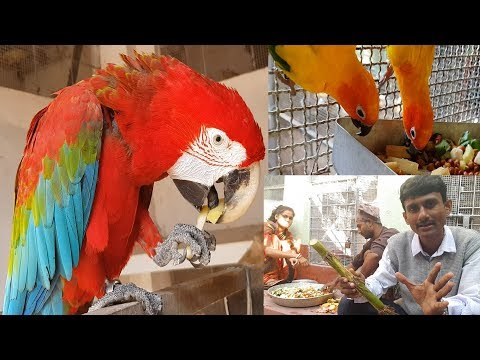 How To Feed Medicines To Your Birds Tips / How Should We Provide Medicines To Birds.