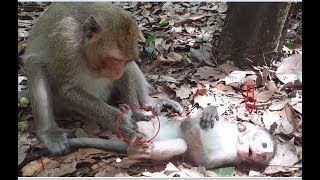 So strange mom monkey, Why mommy doing on her baby monkey?How lovely baby monkey!