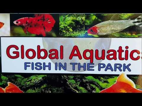 Global Aquatics, Fish Store, Tour.