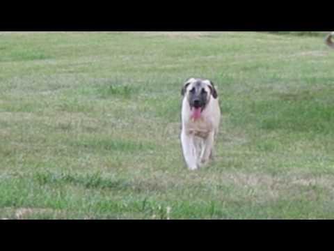 Tired Buddy 100 Yard walk to us 6-29-2016