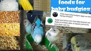 essential foods for baby budgies/ soft foods for baby budgies