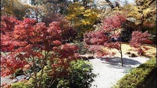 九品仏(浄真寺)の秋景色 2017 thumbnail