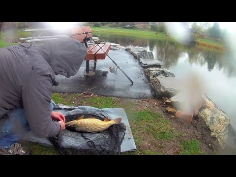 Carp Fishing in Freezing Rain