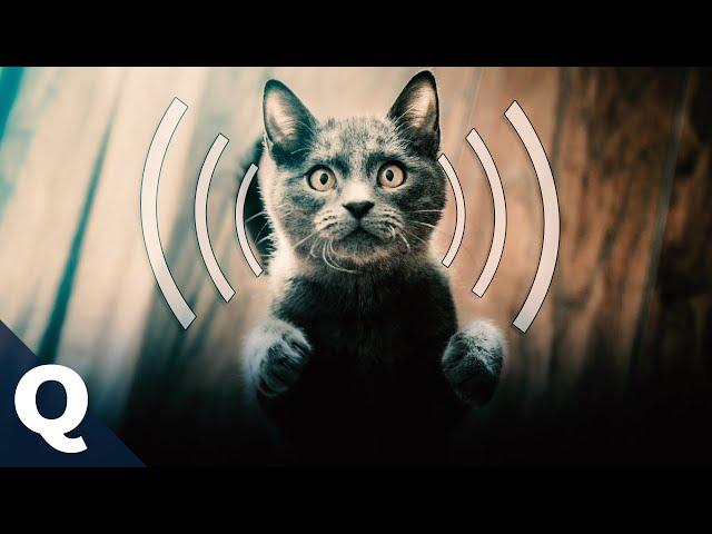 Warum schnurren Katzen? | Quarks (Exklusiv auf YouTube)