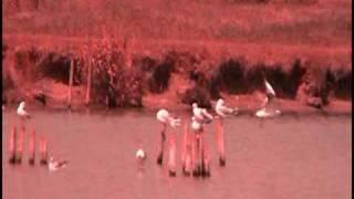 Les Oiseaux Magiques sur le Lac - Mouettes - Charente-Maritime - Terre de repos et de vacances