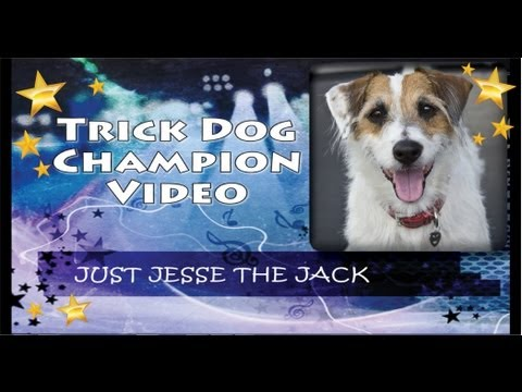 Trick Dog Champion Just Jesse the Jack: First JRT TDCH