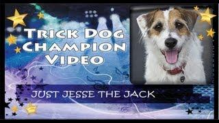 Trick Dog Champion Just Jesse The Jack: First Jrt Tdch