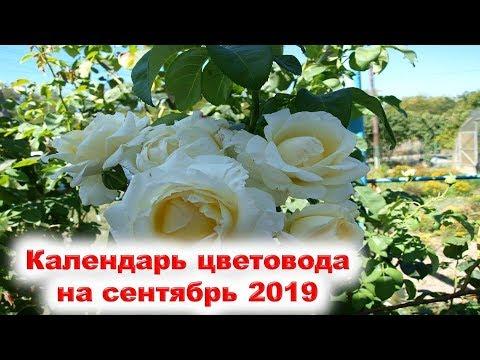 Лунный календарь цветовода на сентябрь 2019 года. Когда садить луковицы весенних цветов, рассаду...