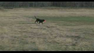 Training A Retriever Puppy The Basics Of A Puppy Double