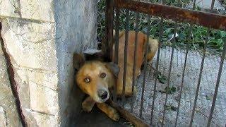 Ludzie Ratują Zwierzęta (2). 5 Niesamowitych Przypadków Uchwyconych na Kamerze