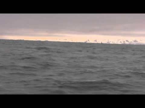 Antarctica Trip   Part 4
