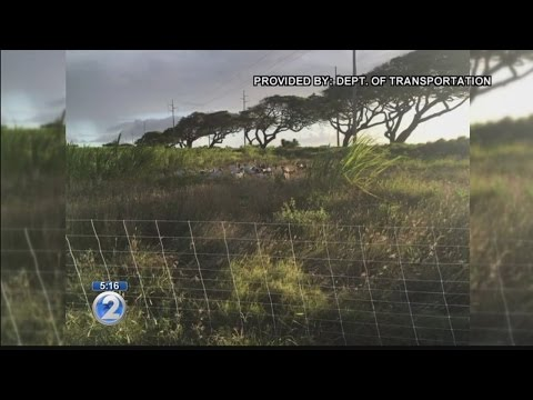 Transportation department uses goats to manage invasive weeds in pilot program