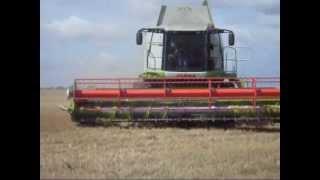 Żniwa 2012 Golenice w Zachodniopomorskie- pszenica