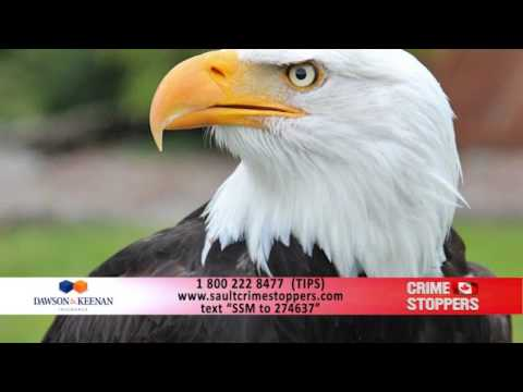 VIDEO: Police searching for suspect in bald eagle shooting
