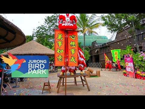 Majestic Lion Dance At Jurong Bird Park Singapore