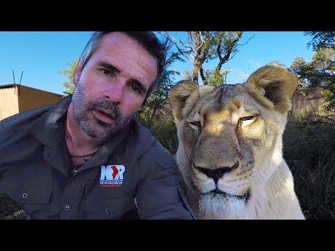 Do Lions Dream? #AskMeg | The Lion Whisperer