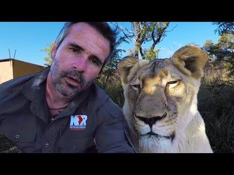 Do Lions Dream? #AskMeg | The Lion Whisperer