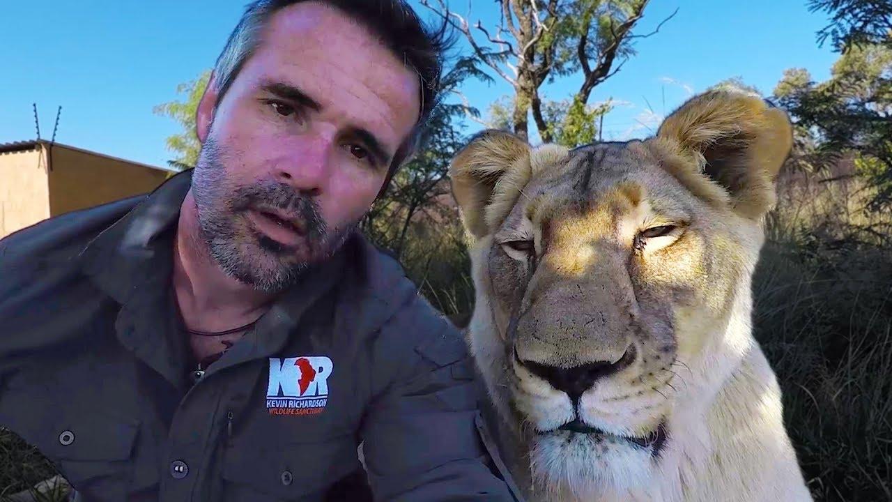do-lions-dream-askmeg-the-lion-whisperer