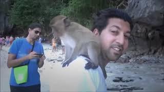 Приколы с обезьянами. Ржачные обезьяны. Смотреть приколы про обезьян!