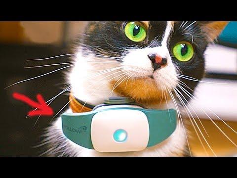 6 Super-Gadgets für Katzen