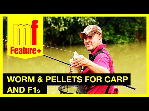 Worm and pellets for carp and F1s – Watch Steve Barraclough in action at Colmans Cottage