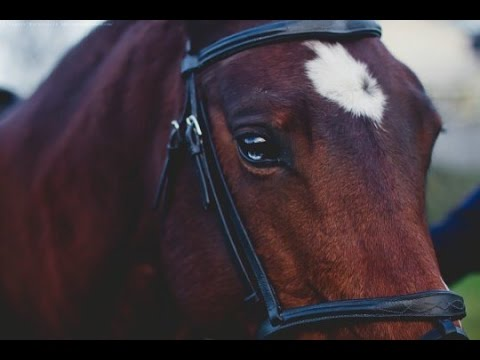 Just Hold On || Horse Jumping Music Video