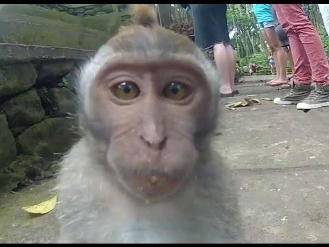 Смешные обезьянки) -