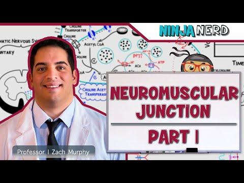 Myology   Neuromuscular Junction   Neuromuscular Transmission   Part 1