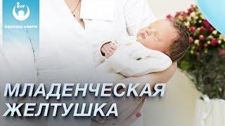 Младенческая желтушка: причины и способы лечения. Женское здоровье, беременность, роды Genesis Dnepr