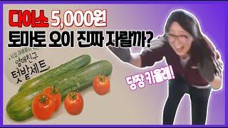 다이소 토마토 키우기/오이키우기/열매친구세트/텃밭