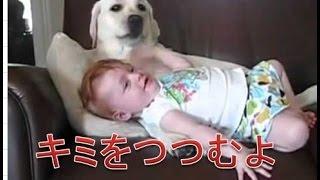 見た目はちょっと怖い感じのする大型犬も実はとてもおおらかで心が優し...