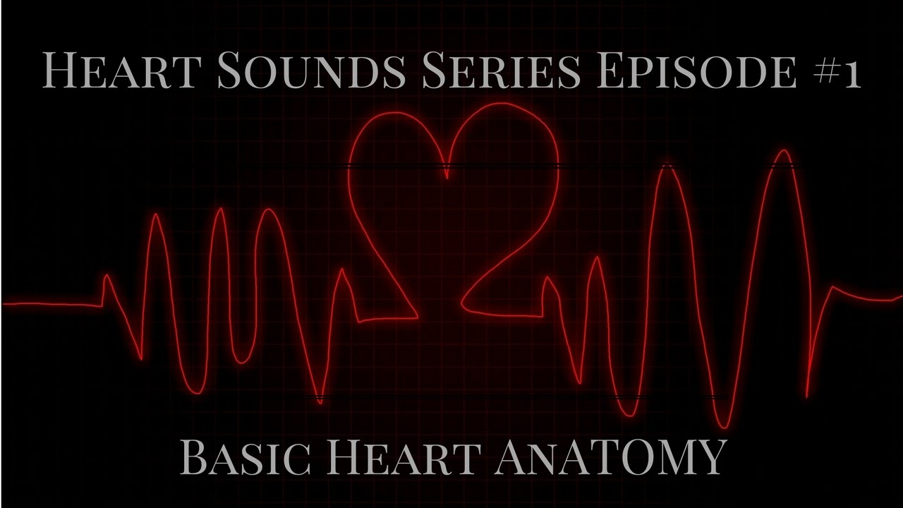 Heart Sounds Series Episode #1 - Basic Heart Anatomy - YouTube