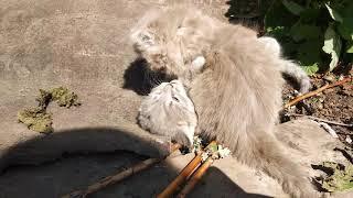 Котята в дар Липецк