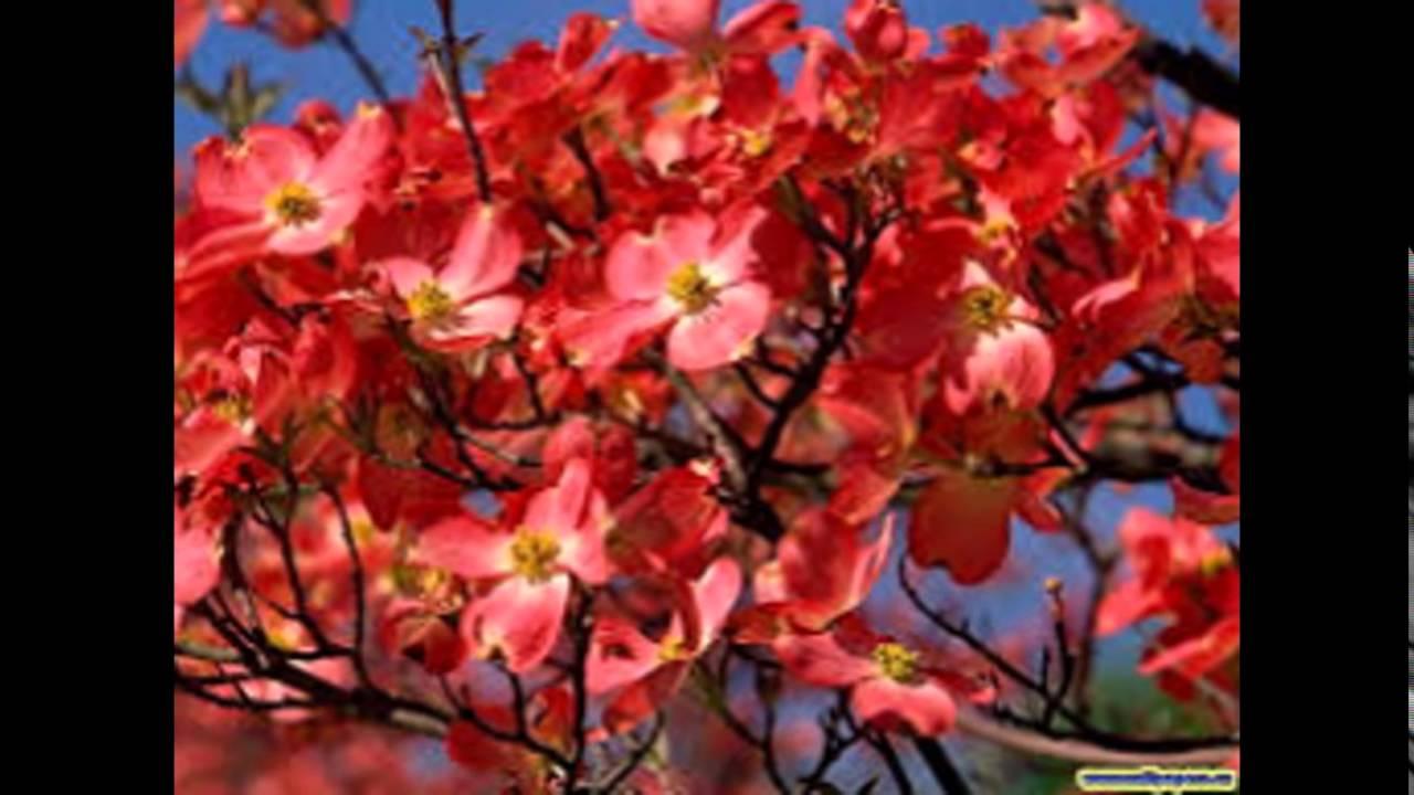 arboles con flores youtube