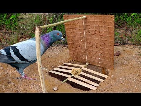 Building Fantastic Hole Bird Trap Make from Tile | Technology Hole Bird Trap