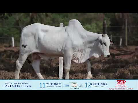 lote 114