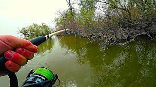 ЭТО КАКОЙ ТО ПАРОВОЗ Рыбалка на дикого сазана в глухом коряжнике