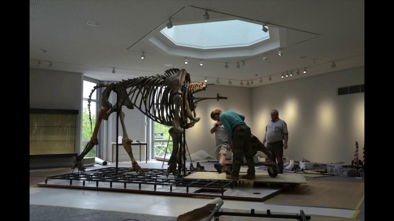 Mammut Dortmund