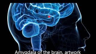 Frequencies to decrease activity in the Amygdala Stage1
