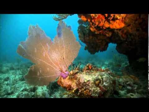 Caribbean Marine Etiquette