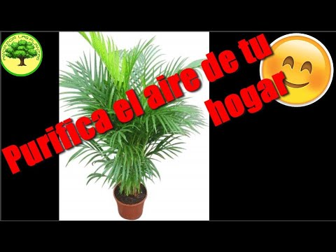 Plantas purificadoras de aire youtube for Plantas de aire