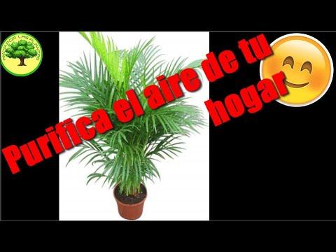 Plantas purificadoras de aire youtube Plantas limpiadoras de aire