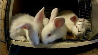 Сено для Кроликов. Давать сено или нет???(, 2017-04-02T09:37:17.000Z)