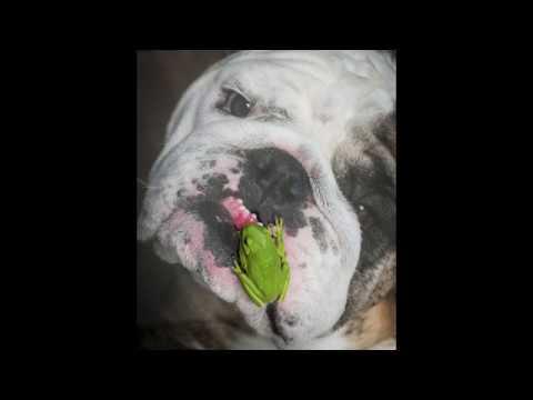 reuben-the-bulldog-close-friends