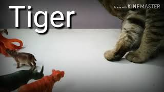Animals Vs Cat