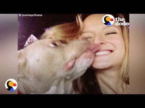 Pit Bull With No Ears Finally Finds Love   The Dodf